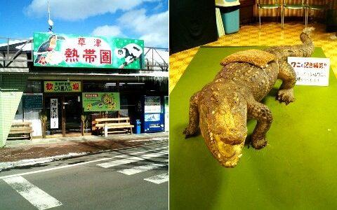 草津温泉に熱帯圏ドームが!日本で最も高い場所にある動物園です!