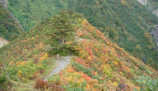 蓮華の森自然歩道を抜け、紅葉が素晴らしいカモシカ展望台へ!
