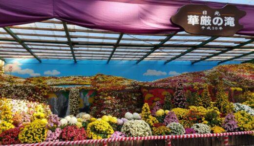 彌彦神社【菊まつり】に行こう!菊の出品数と品目は全国随一の規模!