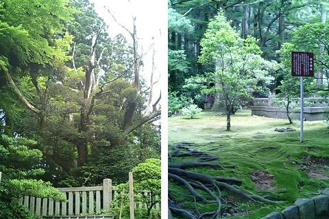 yahiko-shrine-keidaisha10