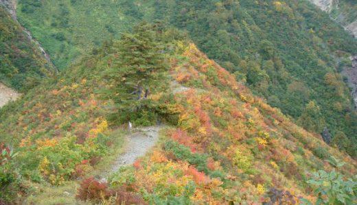 蓮華の森自然歩道を抜けてカモシカ展望台へ 紅葉が素晴らしかった