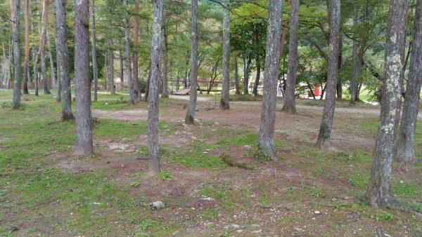 hakuba-green-sport02