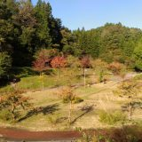 nakaura-himesayuri00