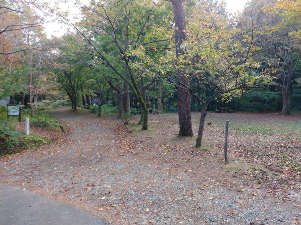 yahiko-camp2019 (5)