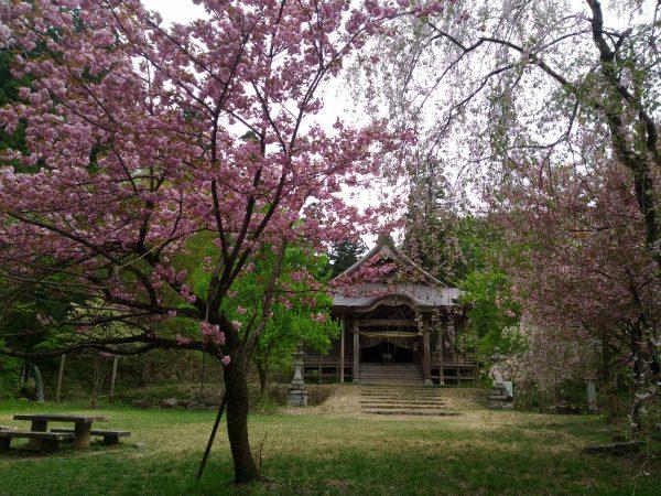 ninouji-shrine-camp-06