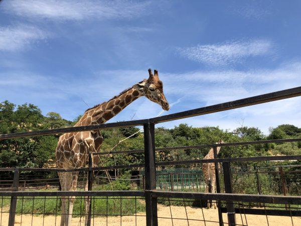 tohoku-safaripark00