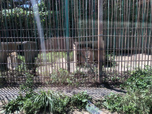 tohoku-safaripark04