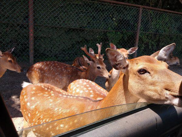 tohoku-safaripark05