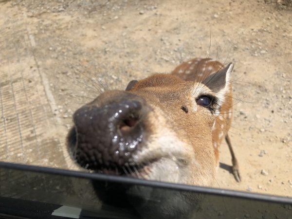 tohoku-safaripark08