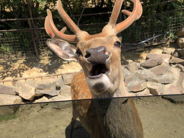 tohoku-safaripark09