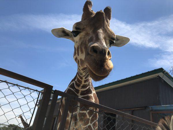 tohoku-safaripark10