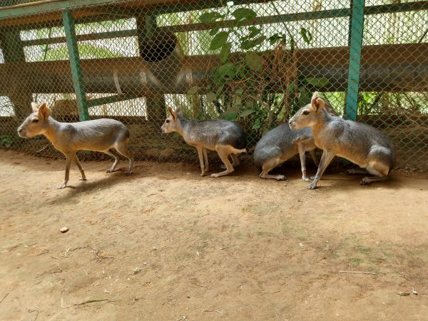 tohoku-safaripark15
