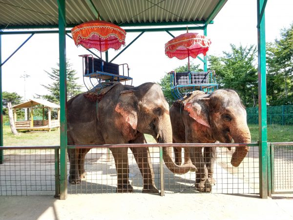 tohoku-safaripark33