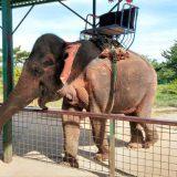 tohoku-safaripark41