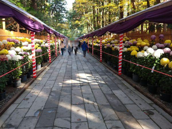 yahiko-shrine-kiku-matsuri (17)