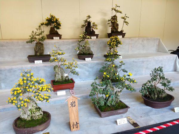 yahiko-shrine-kiku-matsuri (18)