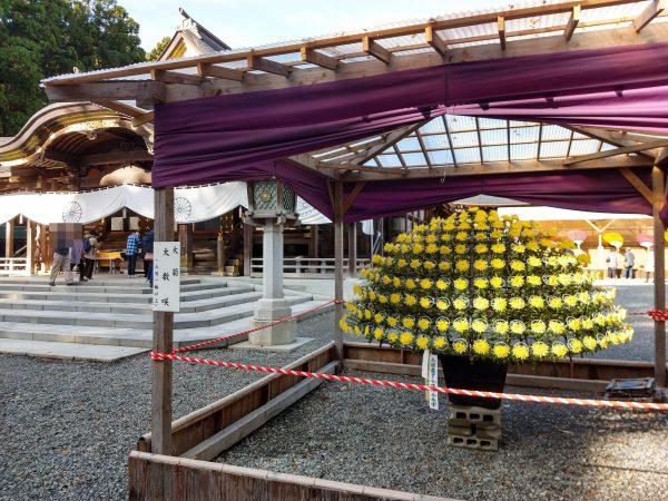 yahiko-shrine-kiku-matsuri (2)