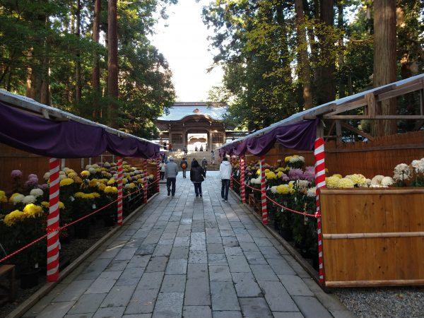 yahiko-shrine-kiku-matsuri (4)