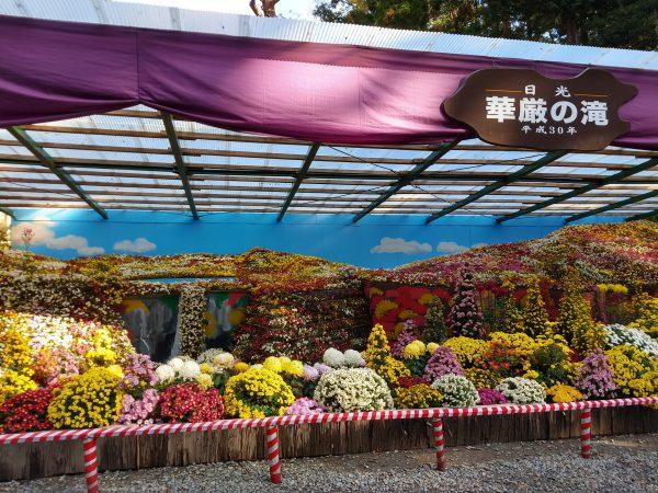 yahiko-shrine-kiku-matsuri (5)