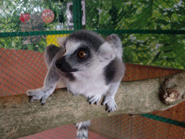 monkey-park-12