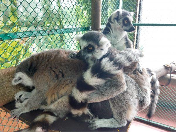 monkey-park-13