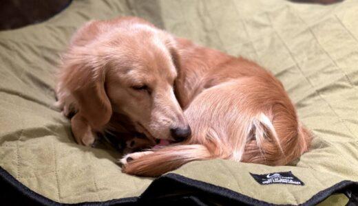 QUICKCAMPドッグコット「ワンコもキャンプでぐっすり眠りたいわん♪」